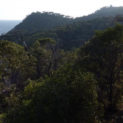 Presqu'île de Giens sur Sentier Littoral 4