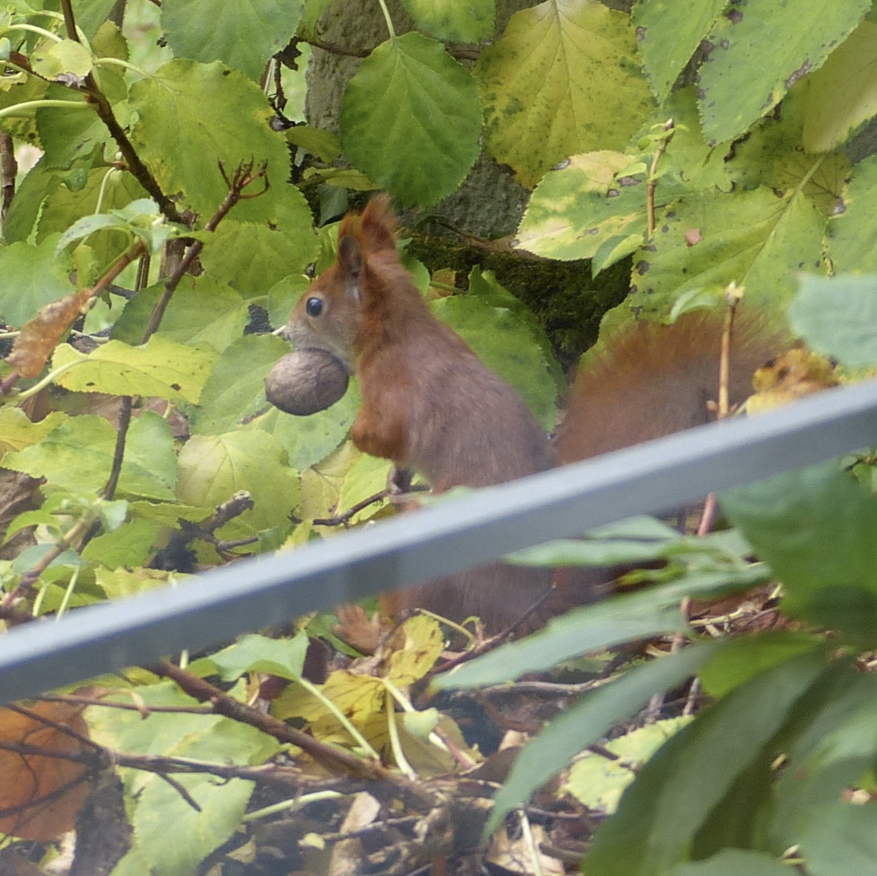 A Squirrel to watch at breakfast time