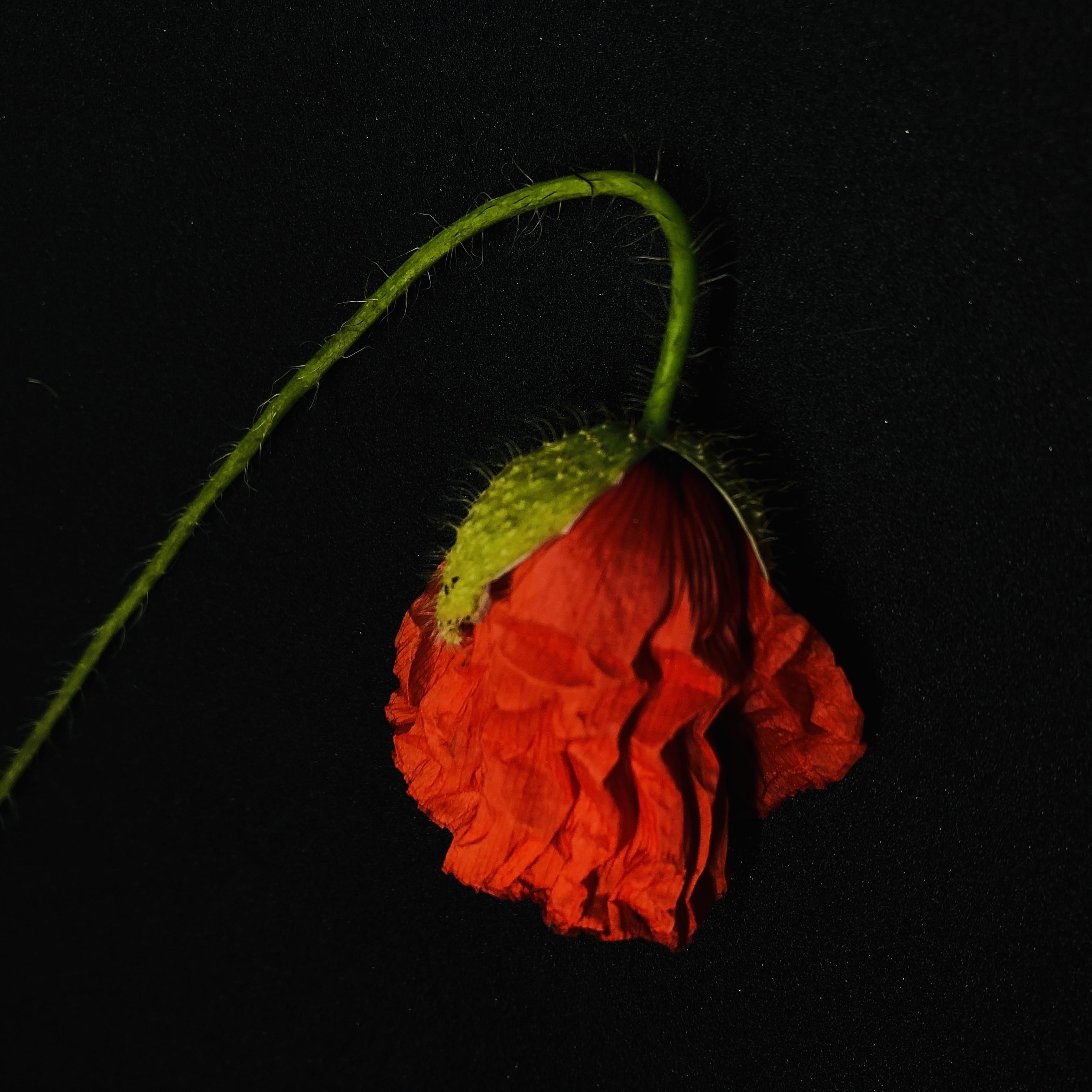 Field Flowers (3)