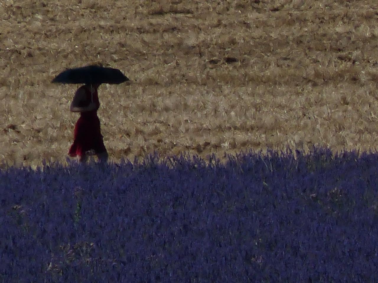 Romantic lavender promenade