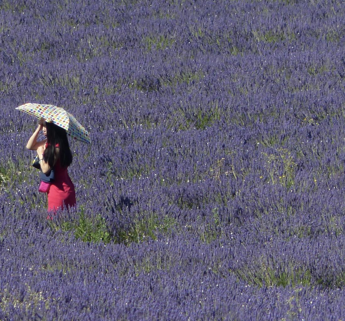 Lost my husband in the lavender !