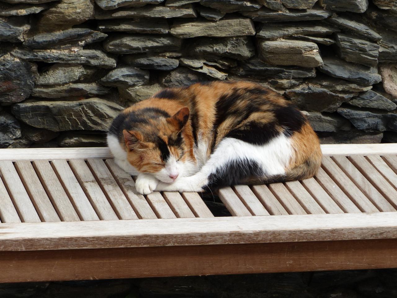 A spanish cat