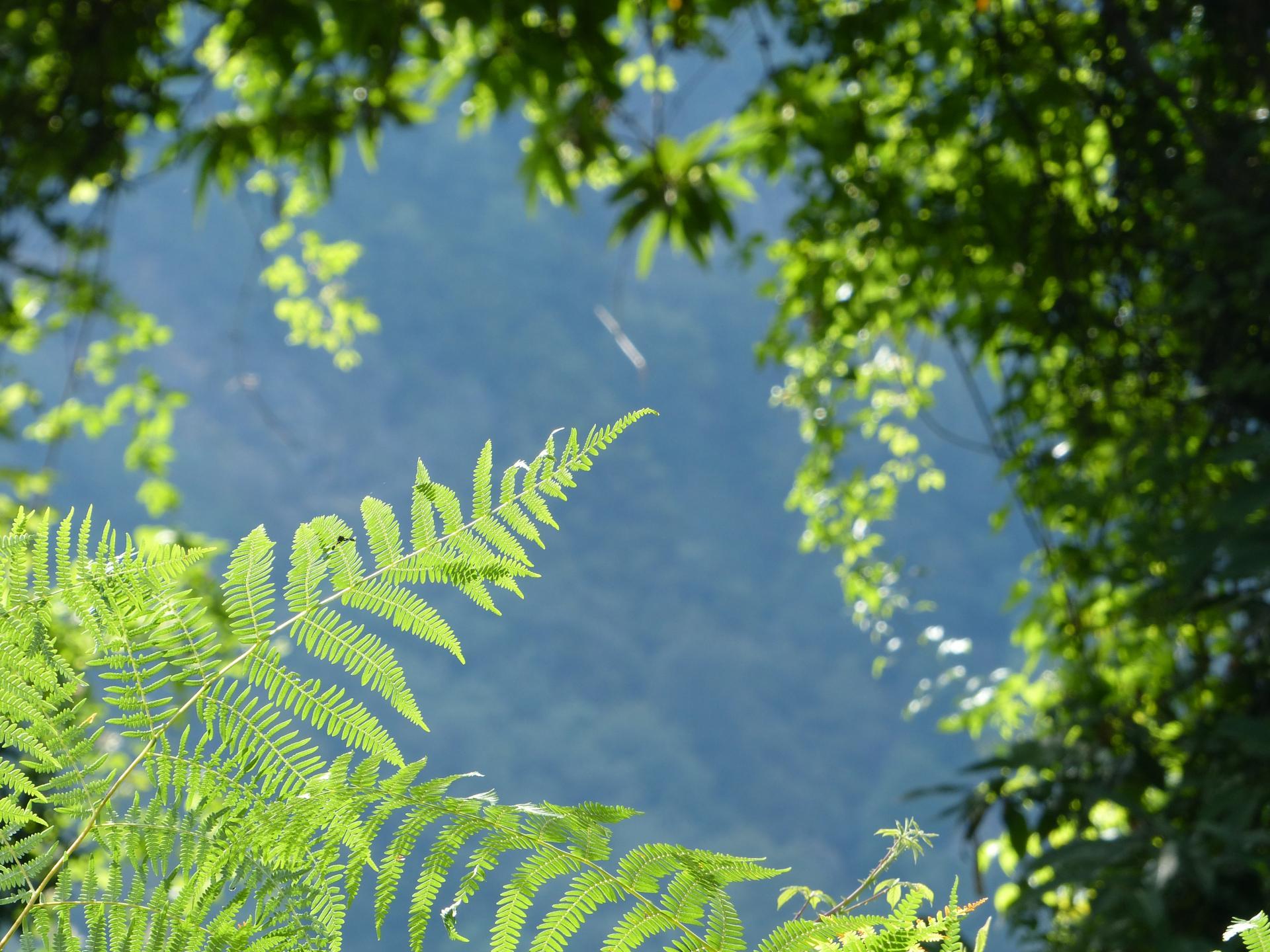 Vegetation und Licht