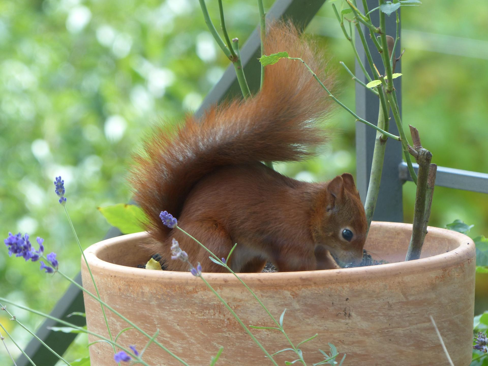 Hiding nuts for winter