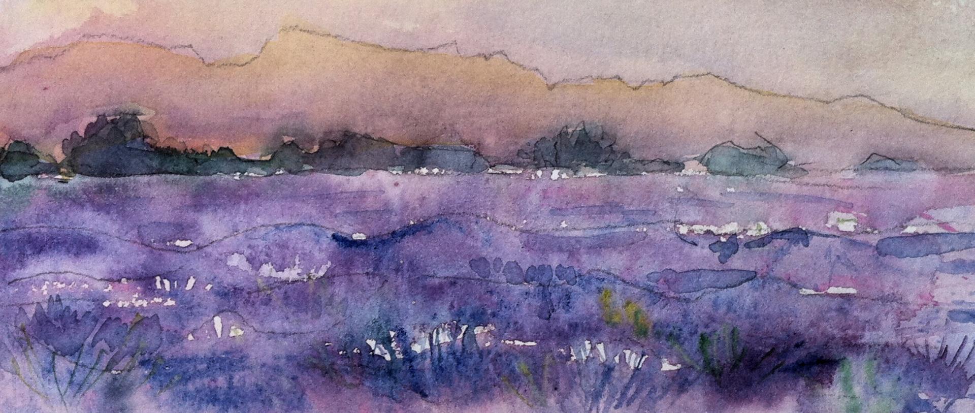 Aurore im Lavendelfeld