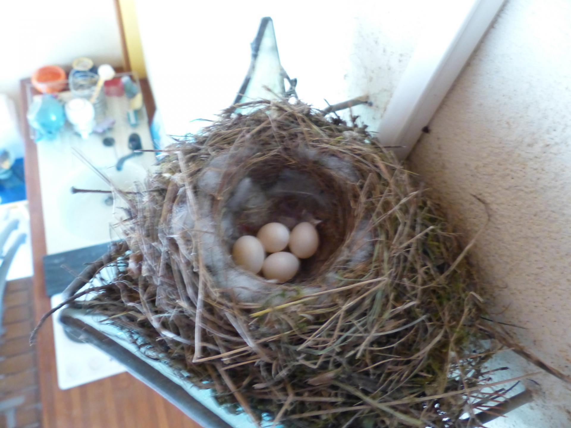 Nest mit 4 Eiern
